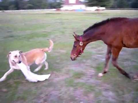A Game Of Tag Between A Pony And A Dog
