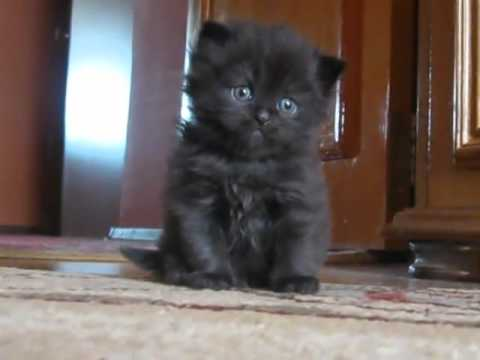 Cutest Sad Kitten Ever