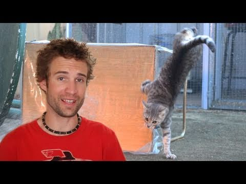The Best Video Ever For Cat Haters