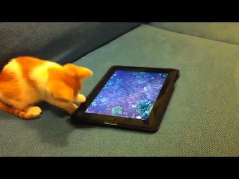 Video thumbnail for youtube video A Confused Kitten And An iPad