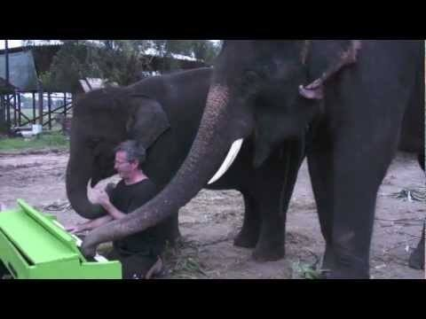 Video thumbnail for youtube video An Elephant Discovers A Piano