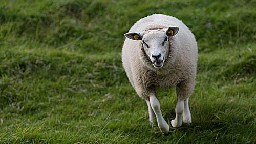 animals-being-jerks-gifs