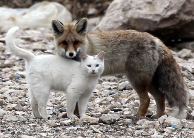 Cat and Fox Hug