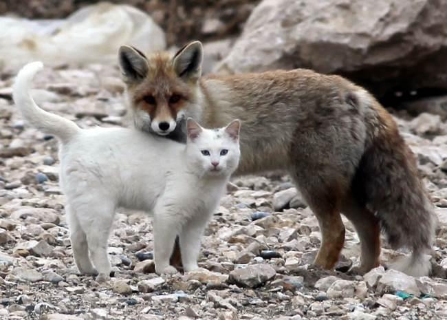 cat-fox-friends-1
