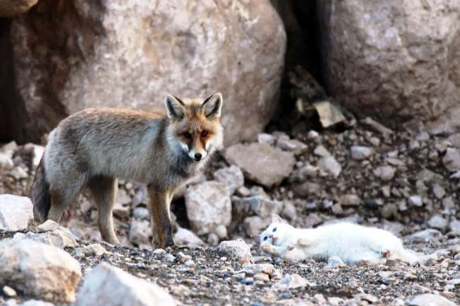 Cat and Fox Friendship