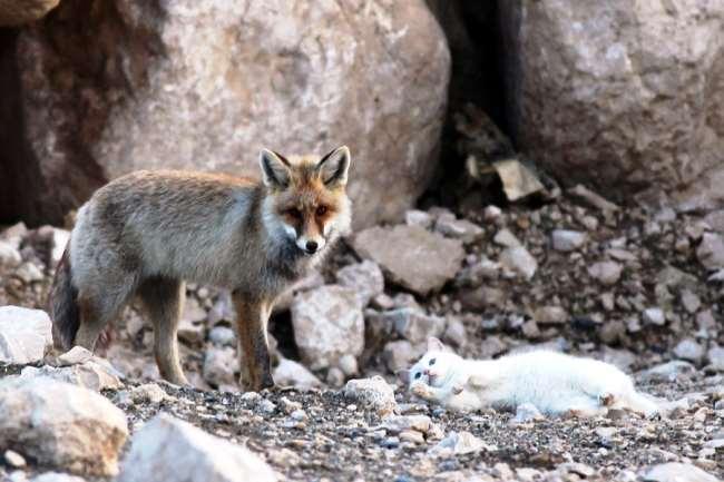 cat-fox-friends-2