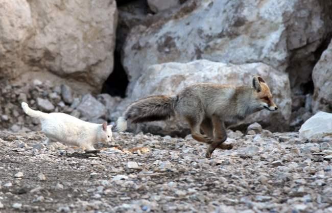 cat-fox-friends-9