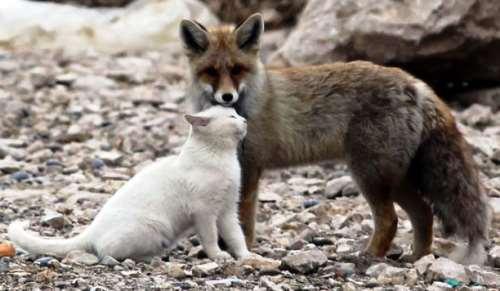 cat-fox-friends