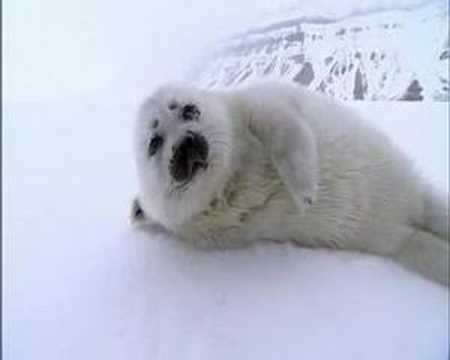 Video thumbnail for youtube video Encountering An Orphaned Seal Baby
