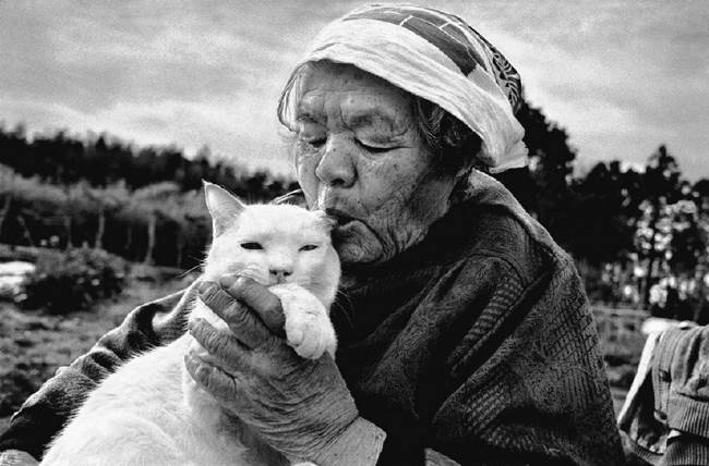 grandmother-cat-12