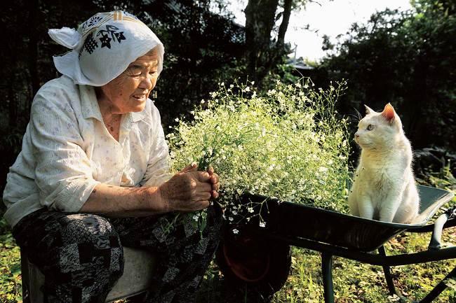 grandmother-cat-17
