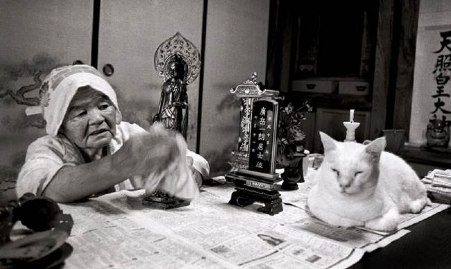 grandmother-cat-19
