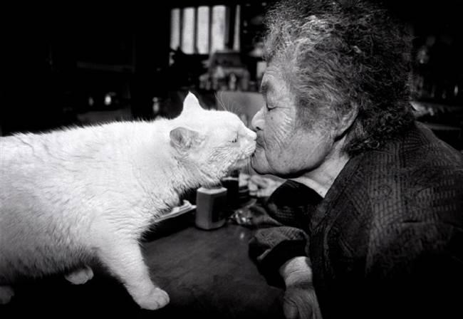 grandmother-cat-2