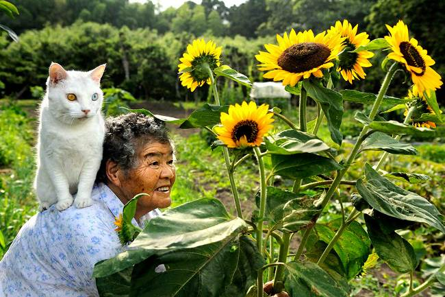 Grandmother and Cat Photograph Sunflowers