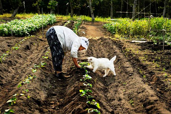 Grandmother and Cat Photograph Tending Fields
