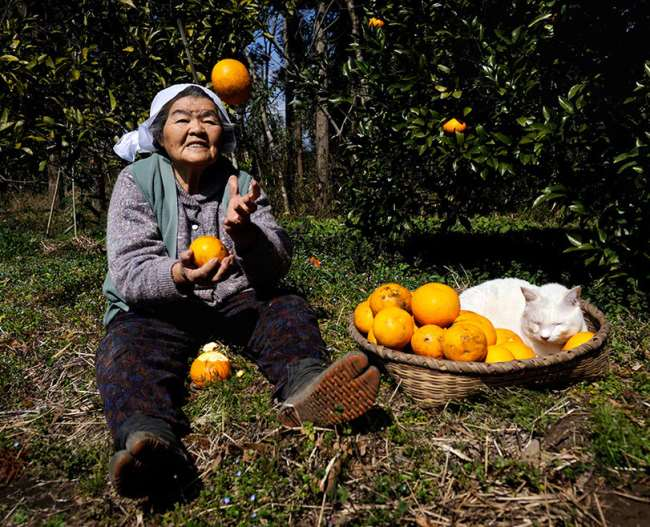 Grandmother and Cat Photograph Oranges