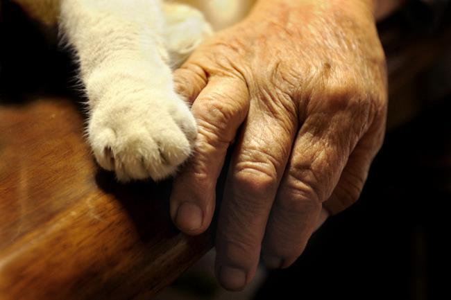 grandmother-cat-4