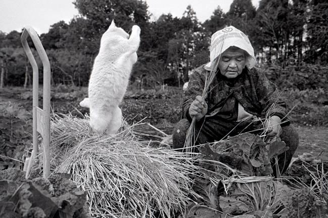 grandmother-cat-7