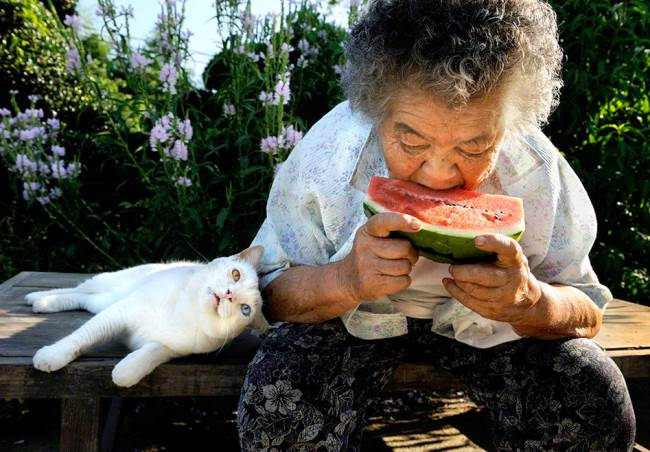 grandmother-cat-8