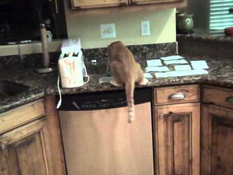 Video thumbnail for youtube video How To Keep Cats Off Of Counters – PBH2