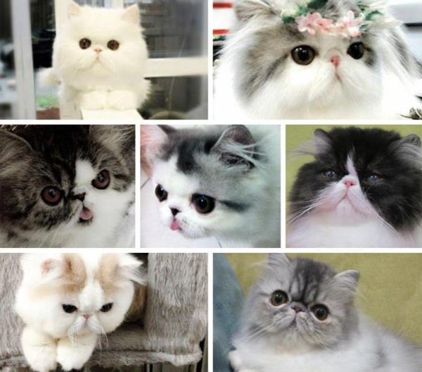 instagram-homer-cattery