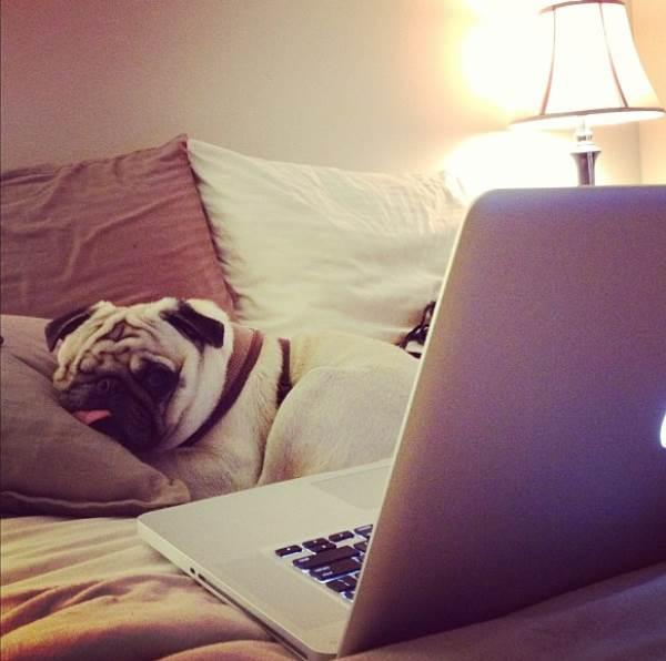 Pug Jack On Bed