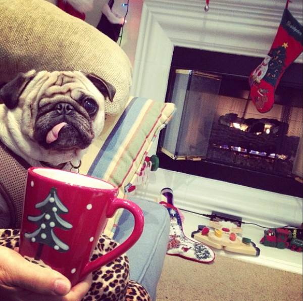 pirate-pug-jack-christmas