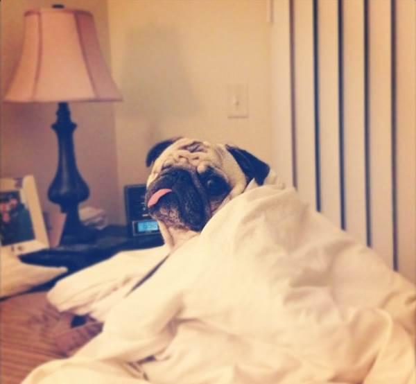 pirate-pug-jack-comforter