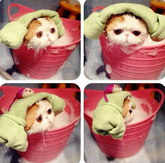 Snoopy Cat Bath