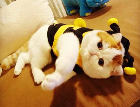 snoopybabe-gallery-bee-costume-laying-down