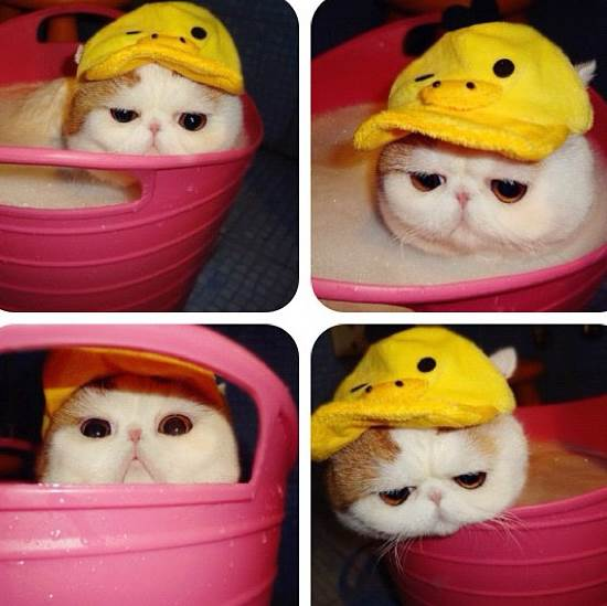 Snoopy Bucket Bath