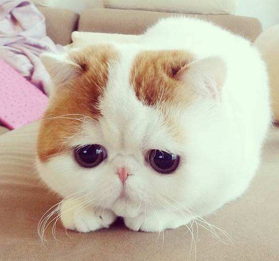 Instagram Cat Snoopy Face
