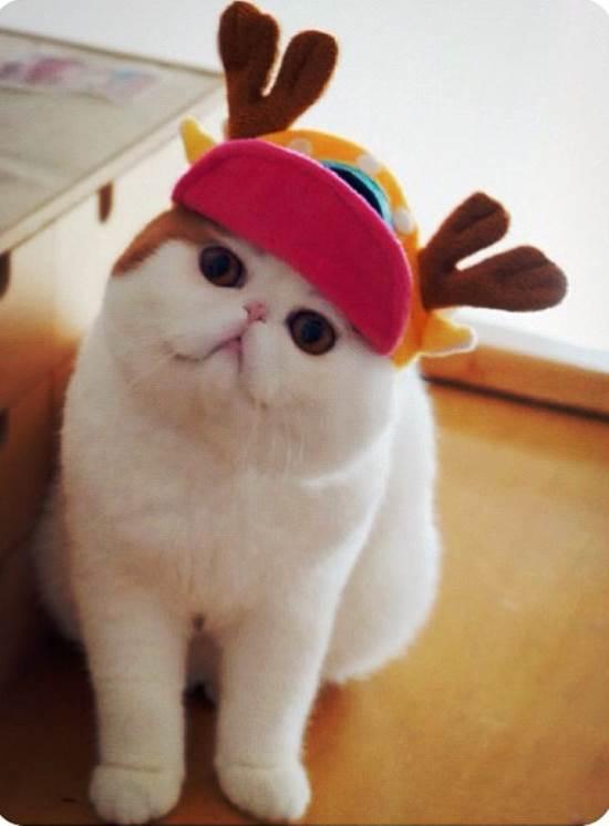 Instagram's Cutest Cat