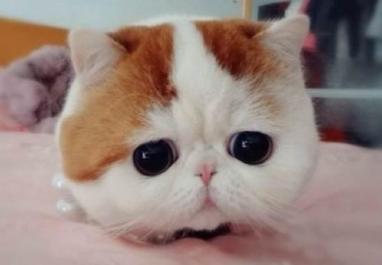Snoopy As Kitten Face