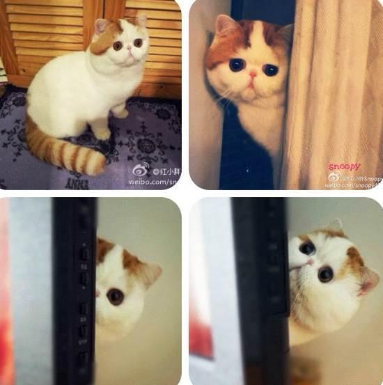 Snoopy Instagram Cat Looks Around Door