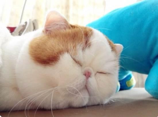 snoopybabe-gallery-sleeping