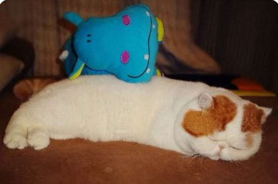 Snoopybabe Sleeps With Stuffed Animal