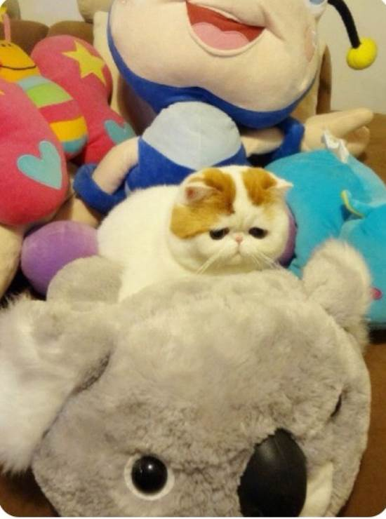 Snoopybabe Instagram's Cutest Cat Hiding In Stuffed Toys