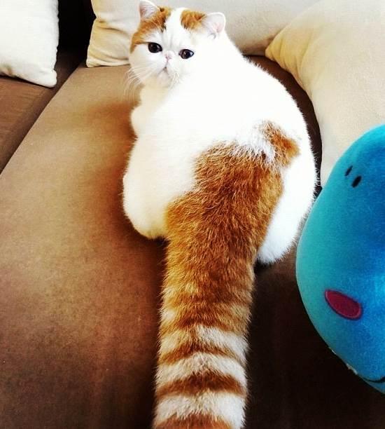 snoopybabe-gallery-tail