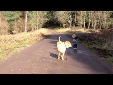 Video thumbnail for youtube video Toddler And Dog, Best Friends
