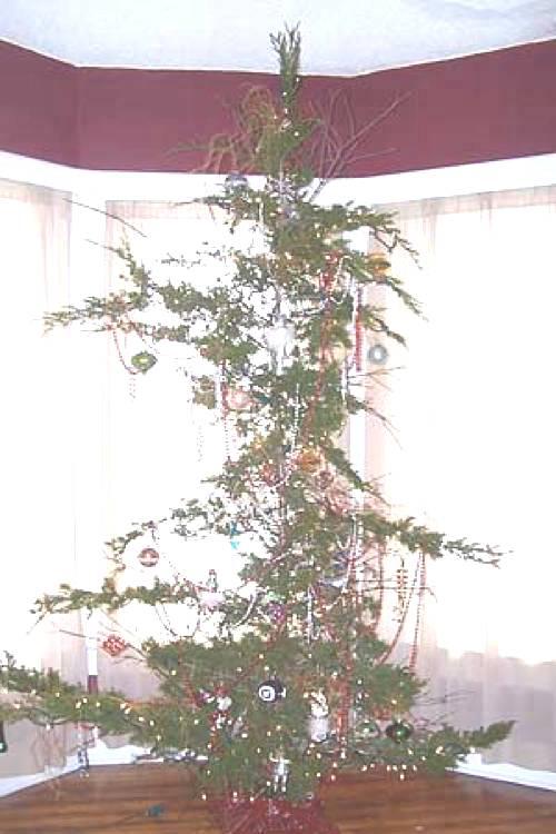 Ugliest Christmas Trees