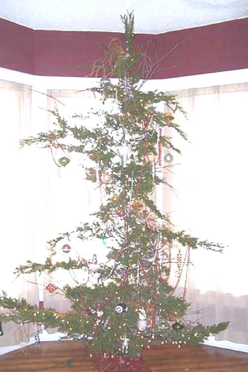 Ugly Christmas Tree.The Fifteen Ugliest Christmas Trees Known To Man