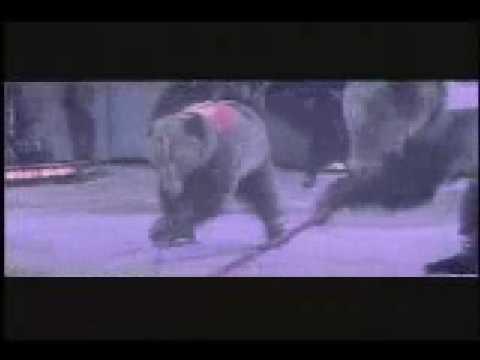 Bears Playing Hockey