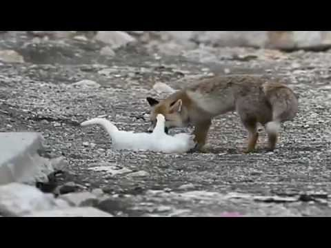 Cat And Fox Become Friends In China
