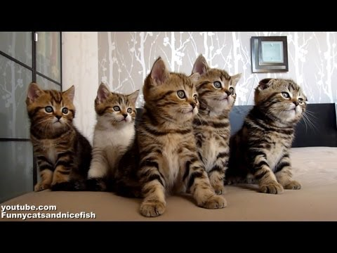 An Adorable Collection Of Kittens