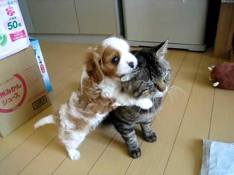 Best Furball Friends
