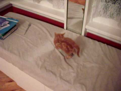 Kitten Cannot Understand Mirror