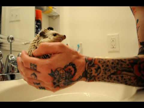 Just Washing My Hedgehog
