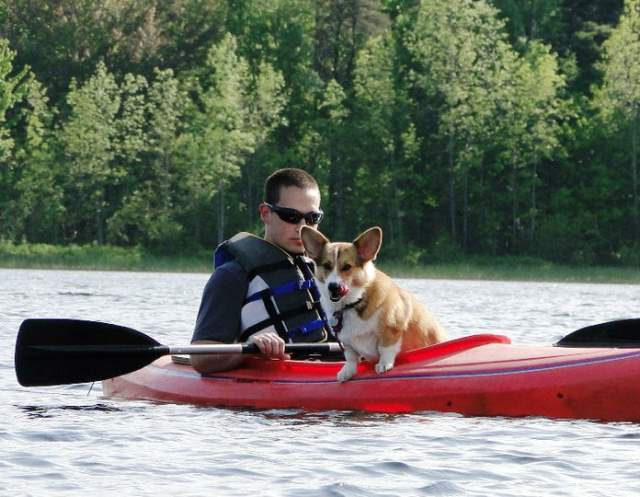 Corgi Goes Canoeing Picture