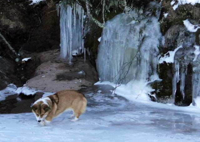 adventure-corgi-frozen-waterfall